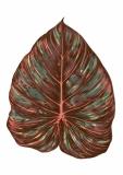 leaf01_ ( im Shop erhältlich )