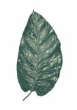 leaf02_ ( im Shop erhältlich )